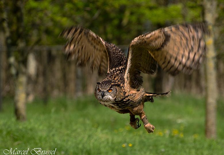 Owl - park hoenderdael.
