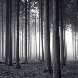 moody pines