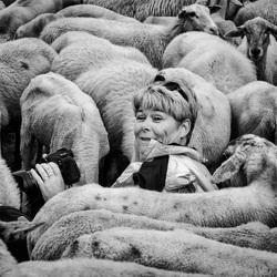 Sheep shooter!