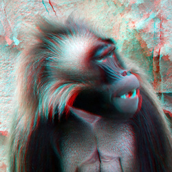 Galada male Blijdorp Zoo 3D anaglyph stereo red/cyan