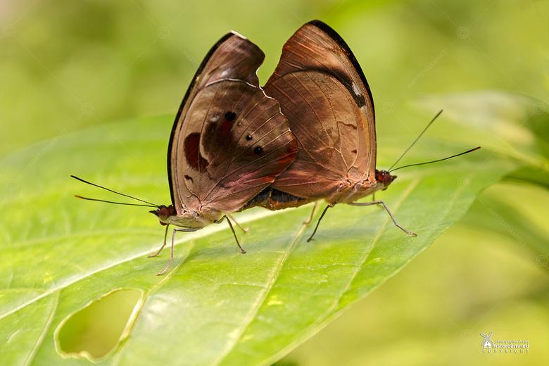 Diergaarde Blijdorp - Twee wippende vlinders in Diergaarde blijdorp ... geen idee hoe ze heten!