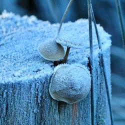 ijzig koud
