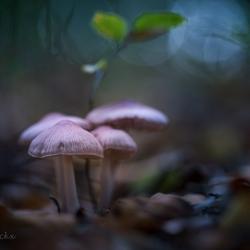 Dark forest scenery