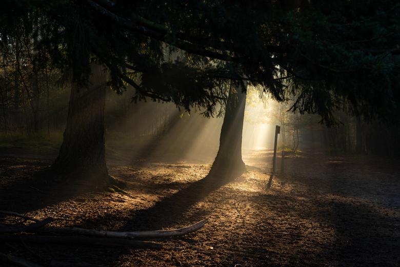 herfstochtend - een heerlijke morgen afgelopen zondag met het mooiste licht en een klein beetje mist.