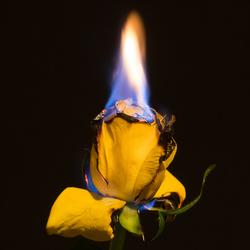 noor bloem 3