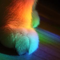 katten voet