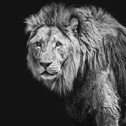 Majestic african king