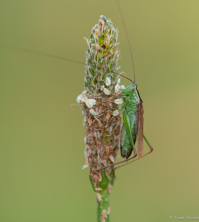 The Green one -