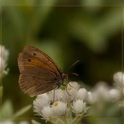 oud vlindertje uit archief