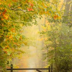 Boswandeling in de herfst
