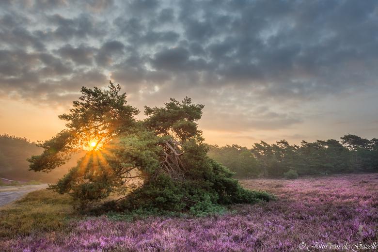 Zonsopkomst Brunssummerheide  - De bloeiende Brunssummerheide tijdens de zonsopkomst.<br /> <br /> Efix: ISO:100, 17mm, f/11, 1/80 sec.<br /> <br /