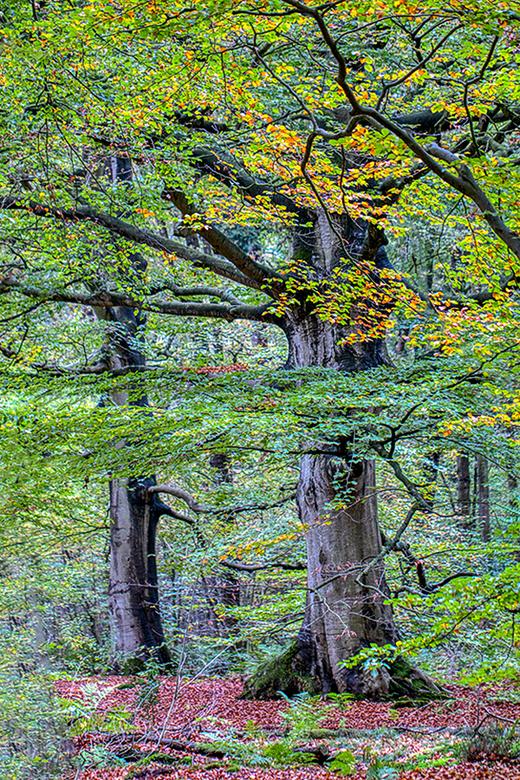 """Bomen in het Rijsterbos - Hierbij een impressie van enkele bomen in het prachtige Rijsterbos in Zuid-Friesland.<br /> <br /> Groet <a href=""""https//p"""