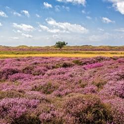 Mooie kleuren op Texel.