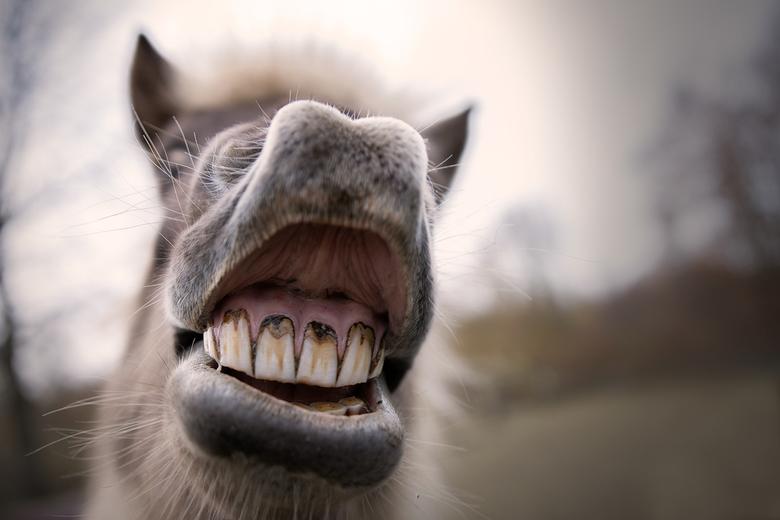 Smile... - Even mijn nieuwe lens uitproberen. De sigma art 18-35, en wat is het leuk om deze uit te proberen met de dieren van de boerderij waar ik we