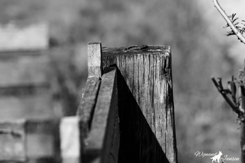 Old farmers wood