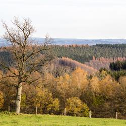 Ardennes002