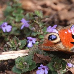 de eenzaam vlinder