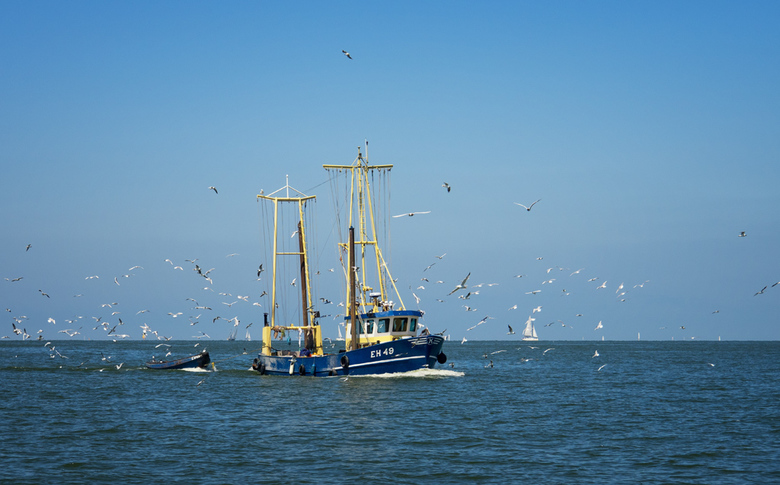 Birds & Boats - Vogels  vinden wat ze zoeken op het Waddenzee.
