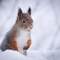 lekker in de sneeuw