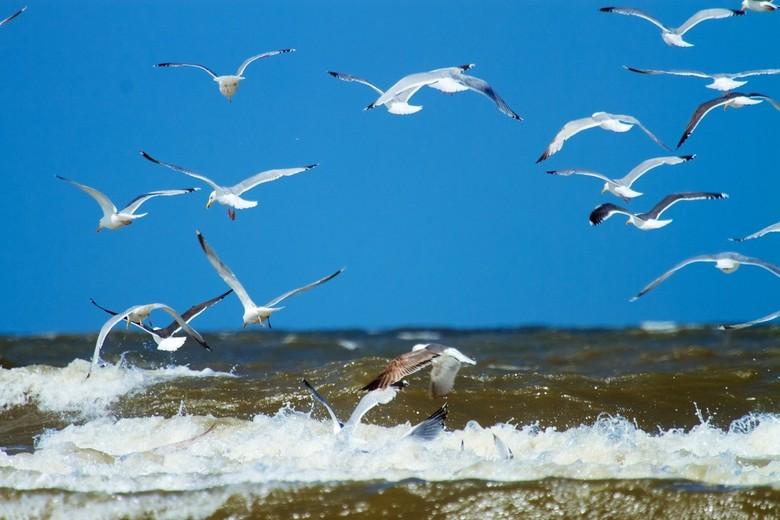 Meeuwen - Een groep meeuwen langs de kustlijn