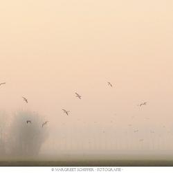 Birds flying high in the sky.