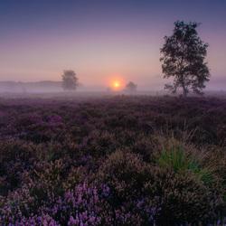 Ruchpense Heide