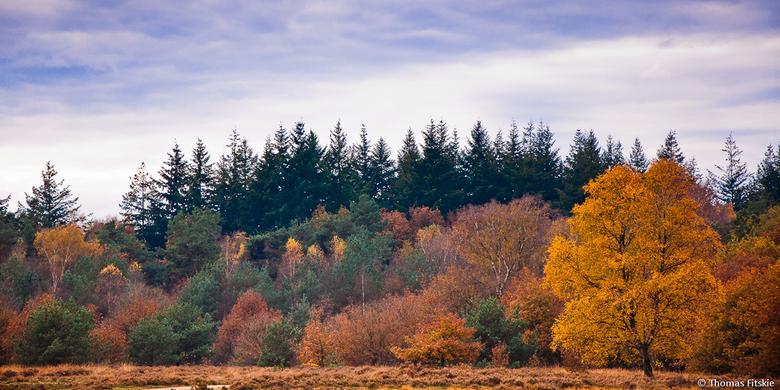 Herfstkleuren - Nog een foto uit dezelfde serie.