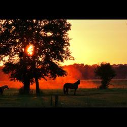Sunset horses ..
