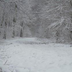 in het bos tijdens sneeuwbui