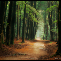 Main Road to Middle Earth