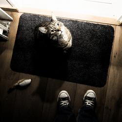 Kat wil naar buiten