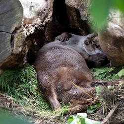 Luie Otter