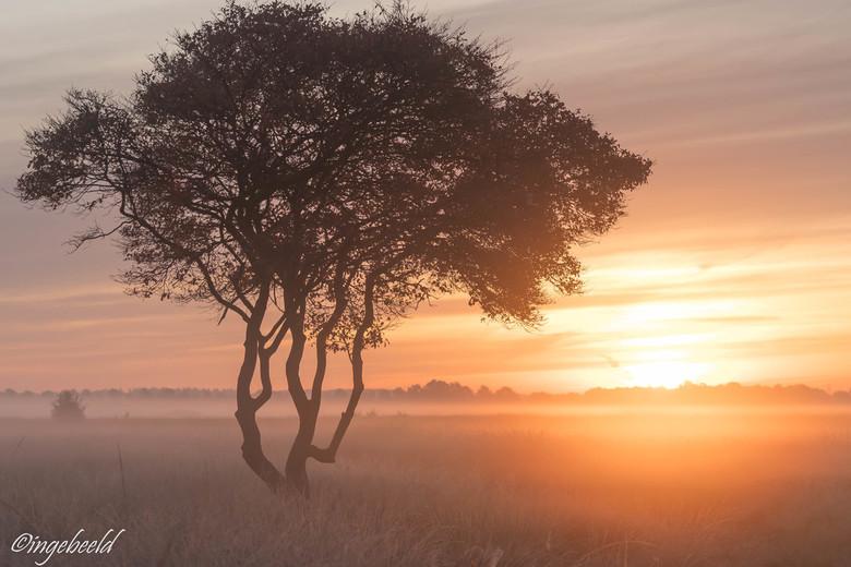 mijn favoriete boompje - Het is 's morgens zo heerlijk in het veen; de stilte, de ruimte, de zonsopkomst en natuurlijk mijn favoriete boompje dat