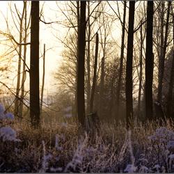 Winters zonneke