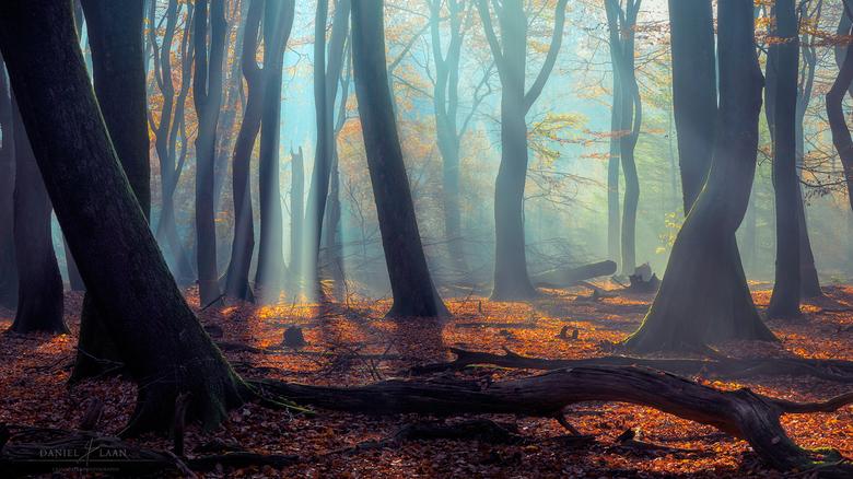Enchanted Grove -