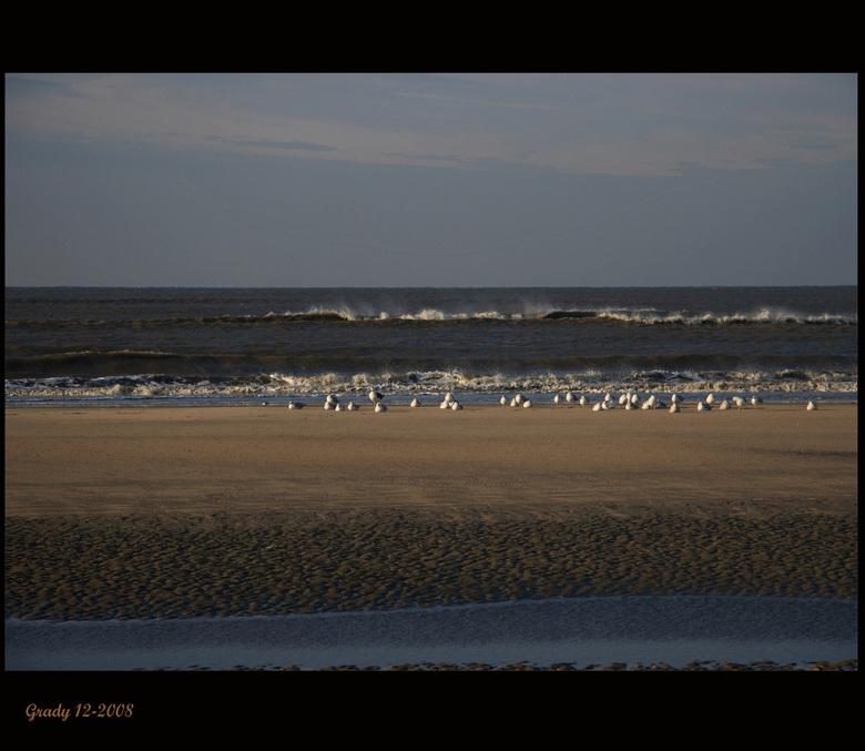 Strand--- meeuwen in de zon - Het was ijzig koud en de meeuwen zitten hier nog lekker in het zonnetje op te warmen. <br /> Wens jullie een zonnige da