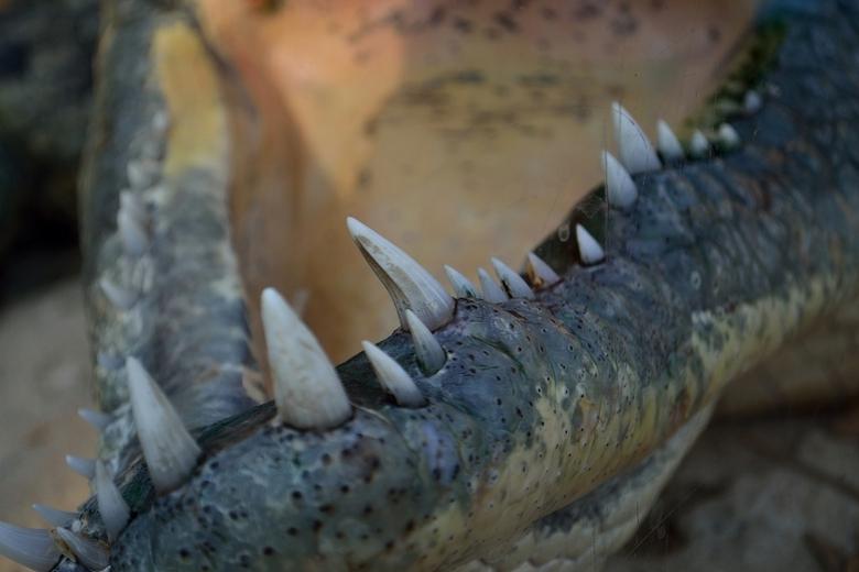 Blijdorp_02.JPG - Dagje Blijdorp, krokodillenbek