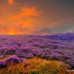 Sunrise Heather