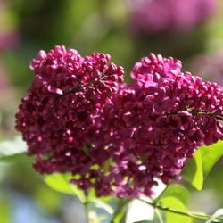 nog een mooie bloem