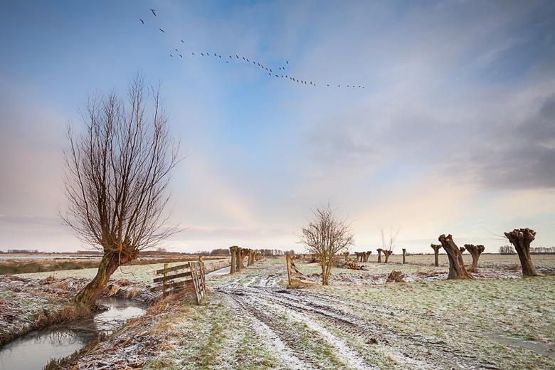 De krimpenerwaard 70 - Een koude ochtend in de polder. Na een flinke wandeling ( 20 min ) dwars door de weilanden uiteindelijk dit plekje bereikt . Ee