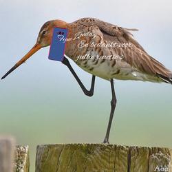 Iedereen een mobiel