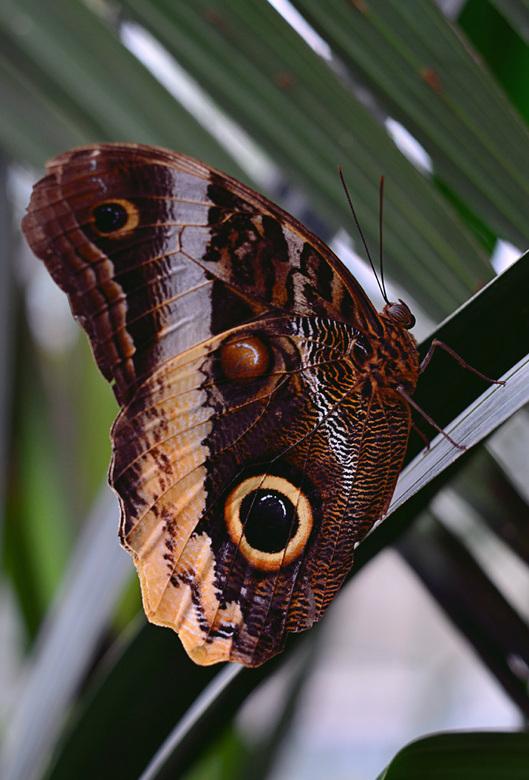 Vlinder op stengel - Vlinder rust op een plant.