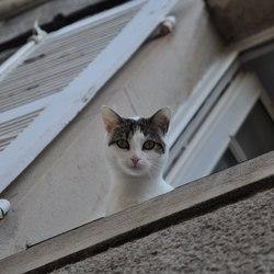 Kat in typisch Frans huis