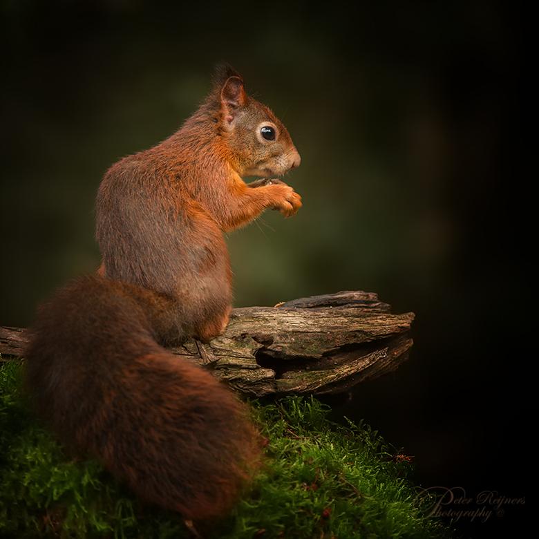 In the spotlight - Iedereen alvast een fijn weekend, ook namens dit leuke eekhoorntje<br /> <br /> Gr<br /> <br /> Peter
