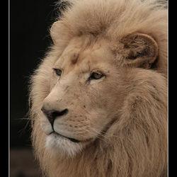 De Koning der dierenrijk
