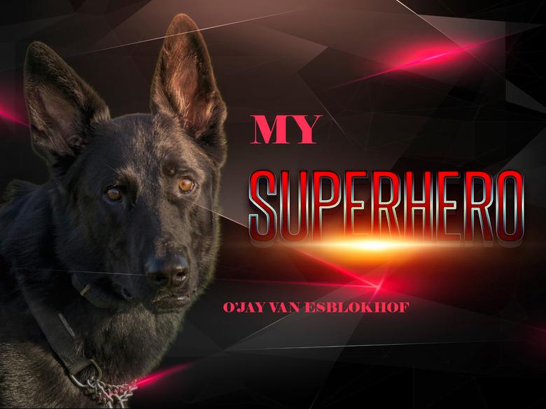 SUPERHERO - Even lekker Photoshop goed voor de geest en fantasie plus leerzaam.<br /> <br /> What can you do about German Shepherd love. Nothing is