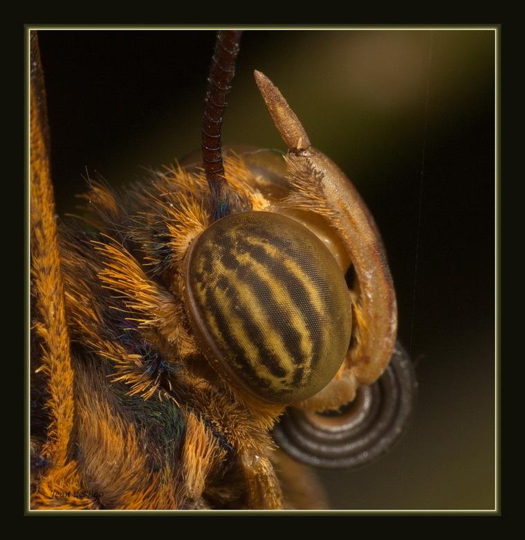 """vlinderoog - van heel dichtbij <img  src=""""/images/smileys/smile.png""""/><br /> handheld gemaakt"""