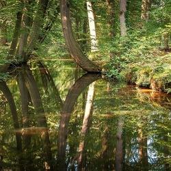 'Dansende bomen' bij Twickel, Delden