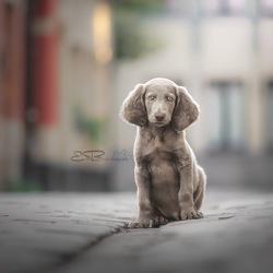 city puppy