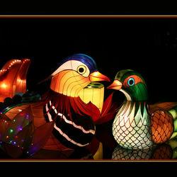 China Lights festival Emmen